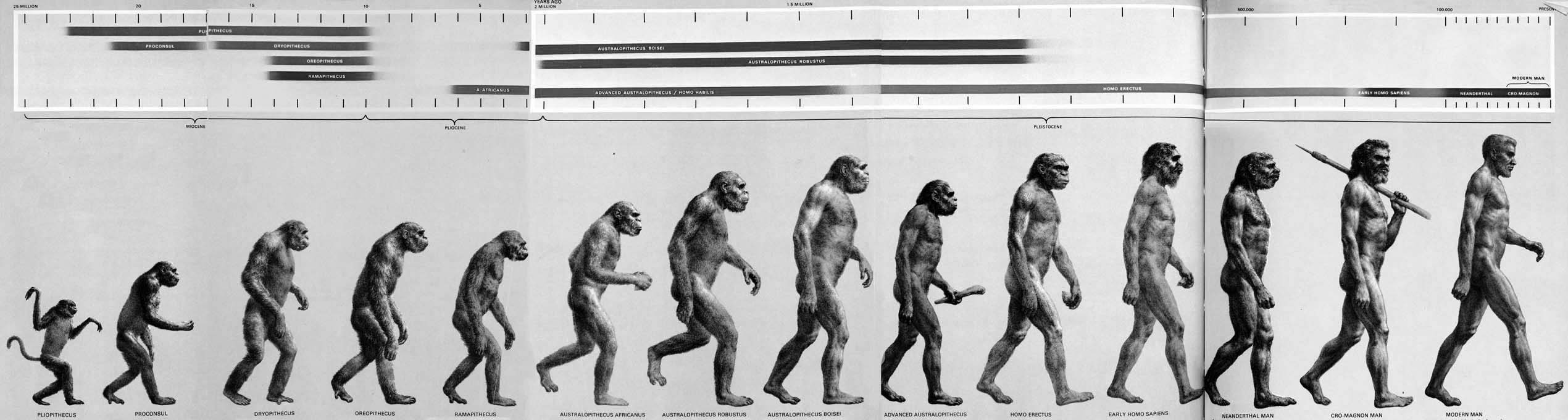 darwinian evolution articles